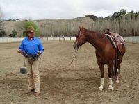 Esperto di equitazione