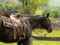 Trekking a cavallo + pranzo/cena, Massa Marittima