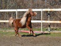 Pony allegro