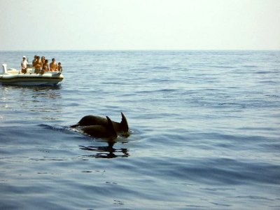 Mare & Vento Whale Watching