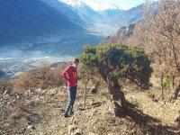 A bonsai naturale incontrato during i trekking