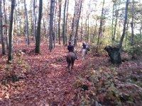 a cavallo nei boschi in Lombardia