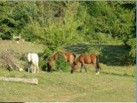 Soggiorni equestri