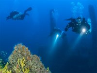 Guided dives with Black Frog