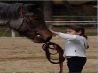 Cavalgiocare