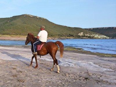 S'Abba Druche Horses