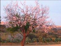 Natura in fiore lungo il percorso