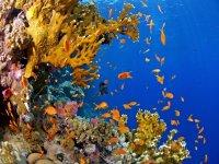 le bellezze del mare