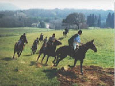 Limone nel Verde Passeggiate a Cavallo