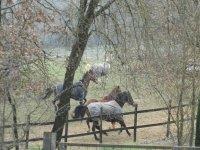 I nostri equini