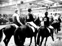 Associazioni equestri