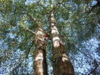 tree climbing in campania