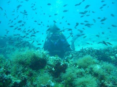 Diving Paradise