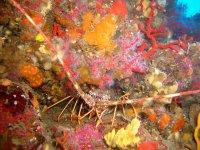 Aragoste e distese di corallo