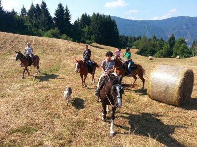 Passeggiata a cavallo Dolomiti Feltrine 1 ora