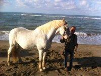 1 hour horseback ride for beginners in Rome