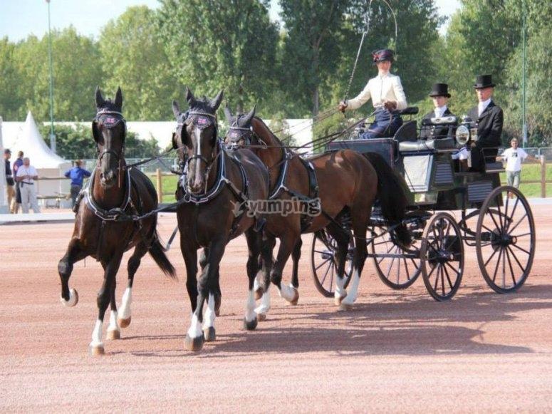 Trainare con cavalli