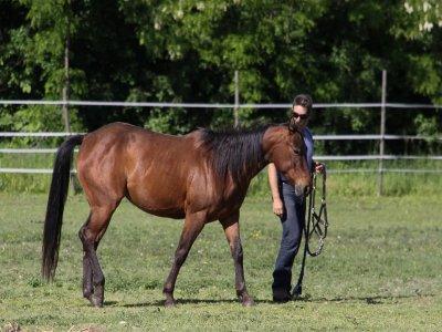 Giornata a cavallo a Blera, Civitella-Cesi