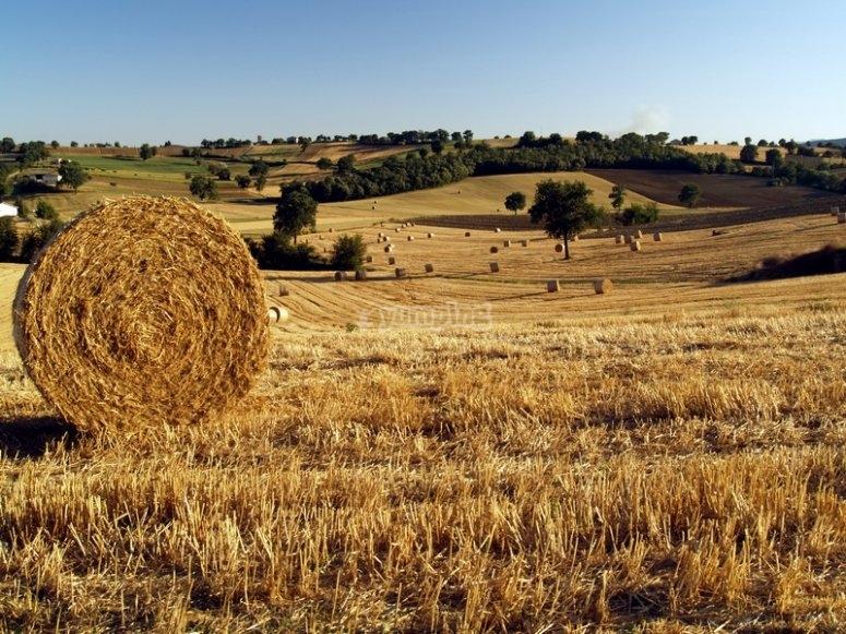 Campagna confine Lazio