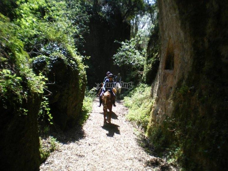 Attraverso sentieri nel bosco