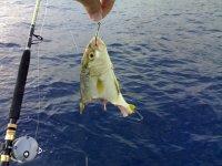 pesca col vivo