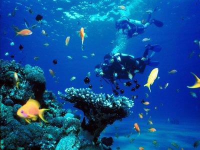 Proteus Diving Diving