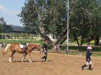 Competizione di cavalli