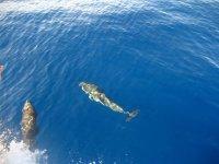 Delfini all'Eolie