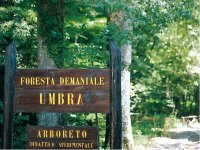 Foresta Demaniale Umbra