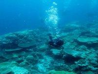 Micronesia 2010
