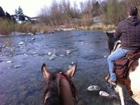 Appassionanti trekking a cavallo