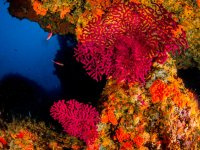 colori dei fondali