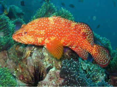 Dive and Travel Tour Operator - Viaggi SUB Diving