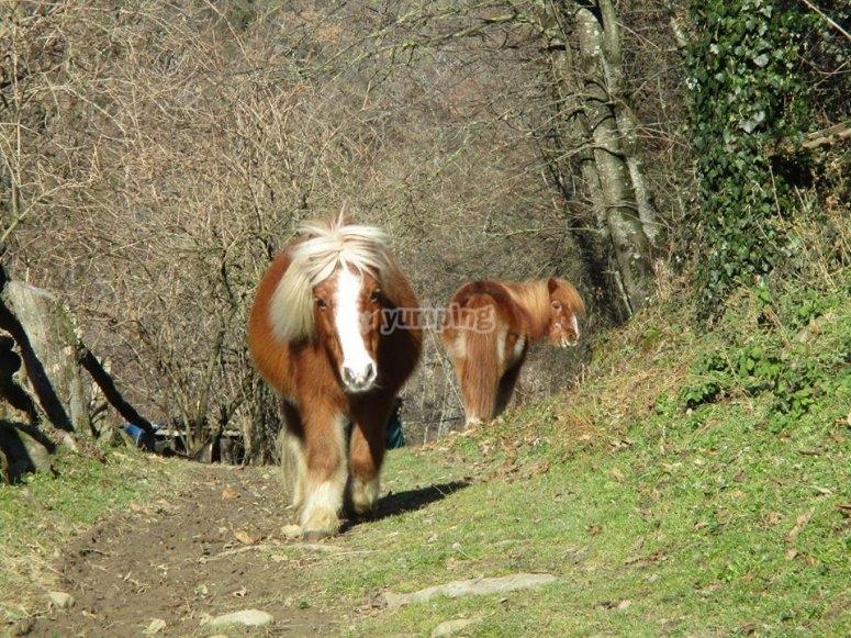 Pony nel bosco