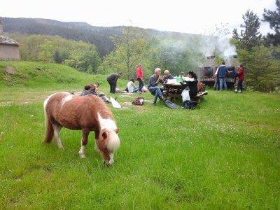 Passeggiata di 2 ore nel bosco con i pony, Londa