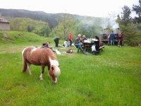 I pony nel prato del pic-nic