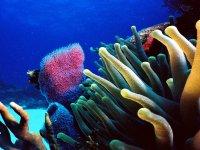 la natura marina