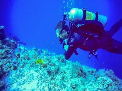 A.S.D. Take Me Diving
