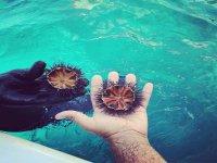ricci di mare