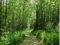 Il nostro bosco mozzafiato