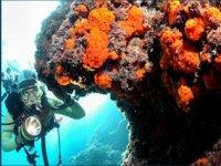 Scoprendo la subacquea