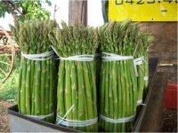 Produzione asparagi