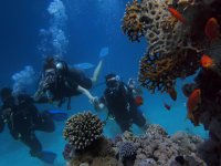 the wonderful corals of the sea