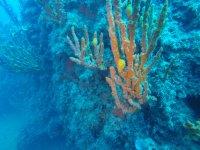 the wonderful underwater world