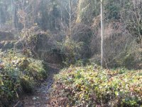 Sentieri boschivi