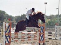 Servizi di equitazione
