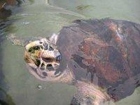 tartaruga marina a Lampedusa