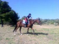 Ottimi rapporti con i cavalli