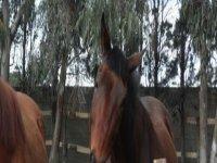 Lezioni a cavallo