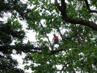 Treeclimbing Adulti